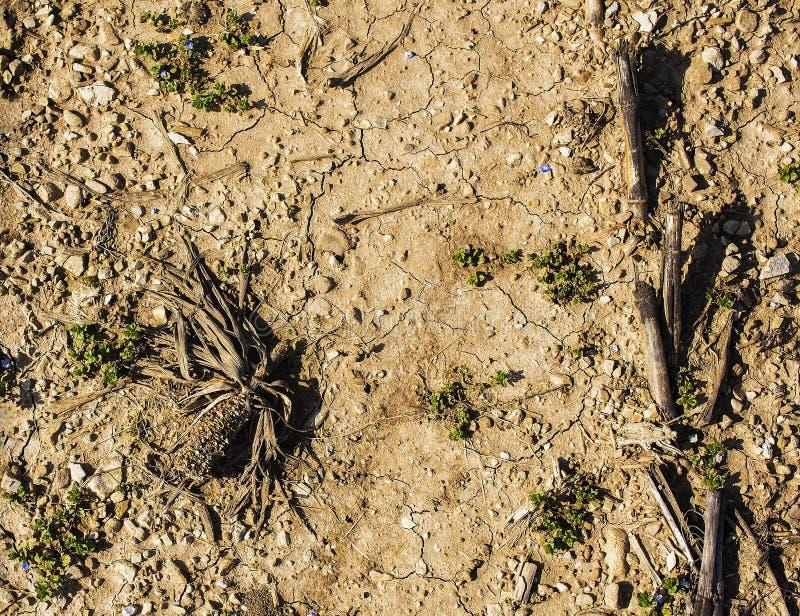 Ξηρό cornfield στοκ εικόνα με δικαίωμα ελεύθερης χρήσης