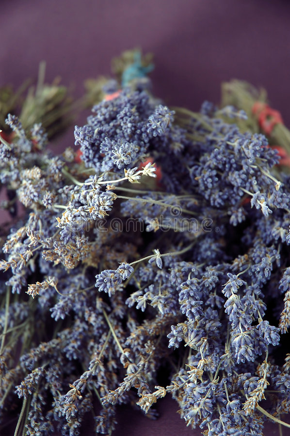 Download ξηρό lavender λουλουδιών στοκ εικόνα. εικόνα από δέσμη - 2232139