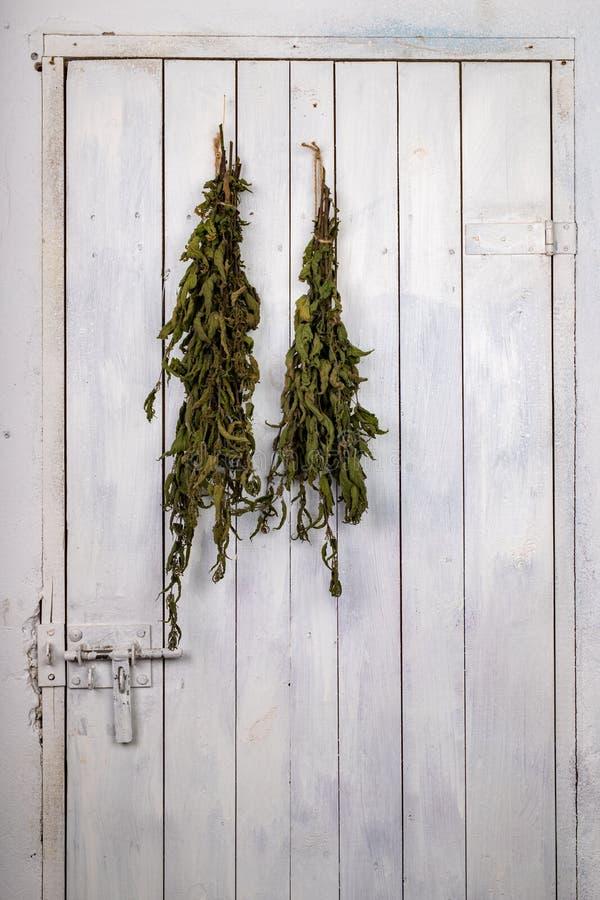Ξηρό nettle που κρεμιέται στην πόρτα του οψοφυλακίου Ξηρά φύλλα nettles που δεσμεύονται σε μια δέσμη στοκ φωτογραφίες