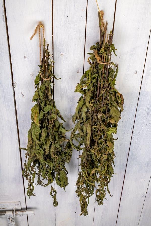 Ξηρό nettle που κρεμιέται στην πόρτα του οψοφυλακίου Ξηρά φύλλα nettles που δεσμεύονται σε μια δέσμη στοκ εικόνες