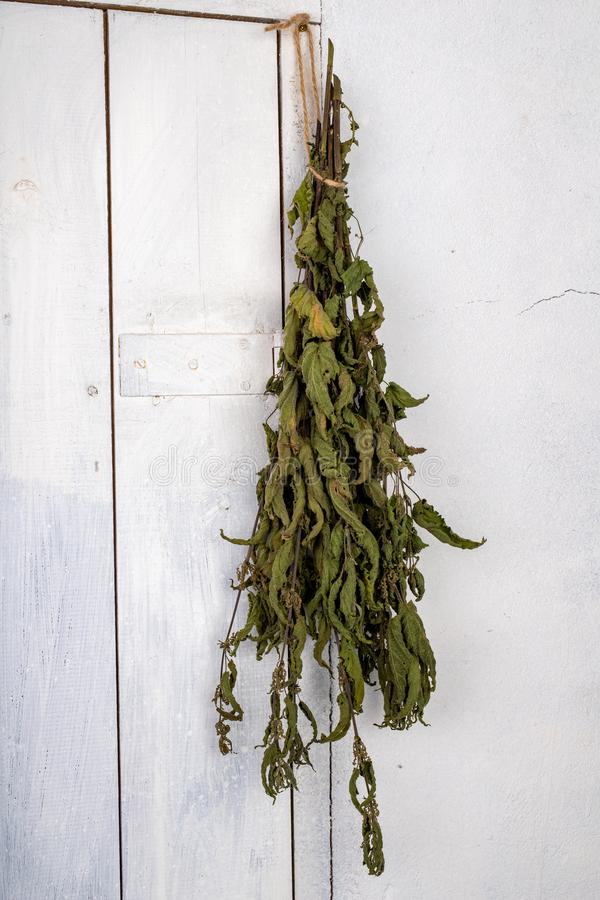 Ξηρό nettle που κρεμιέται στην πόρτα του οψοφυλακίου Ξηρά φύλλα nettles που δεσμεύονται σε μια δέσμη στοκ φωτογραφία με δικαίωμα ελεύθερης χρήσης