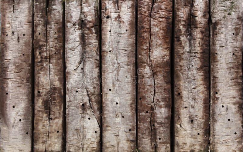 ξυλεία πλατύφυλλων παλ&alph στοκ φωτογραφία