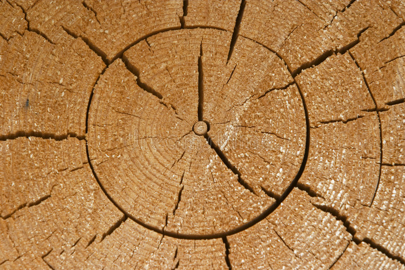 Download ξυλεία στοκ εικόνα. εικόνα από γραμμές, πρότυπο, δάσος - 105081