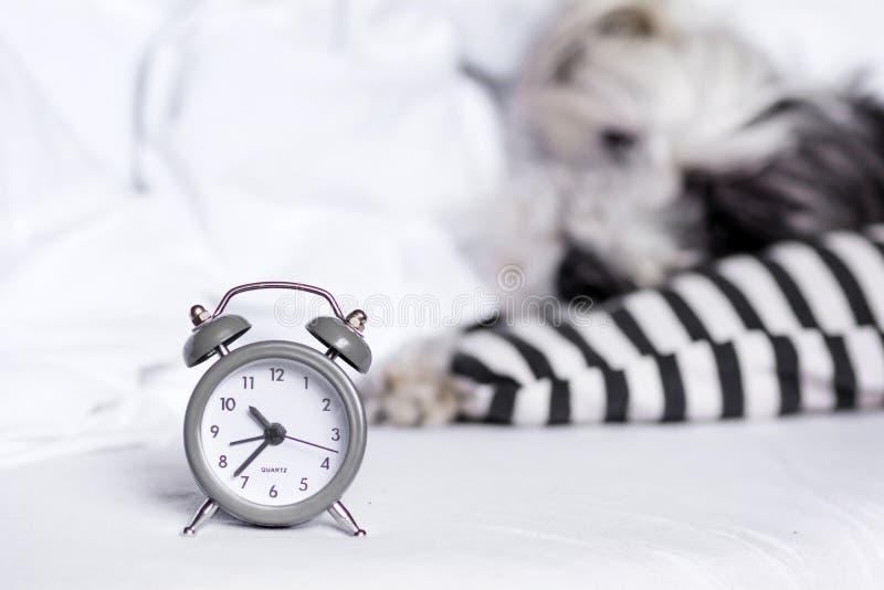 ξυπνητήρι σε ένα υπόβαθρο σκυλιών ύπνου στοκ φωτογραφία με δικαίωμα ελεύθερης χρήσης