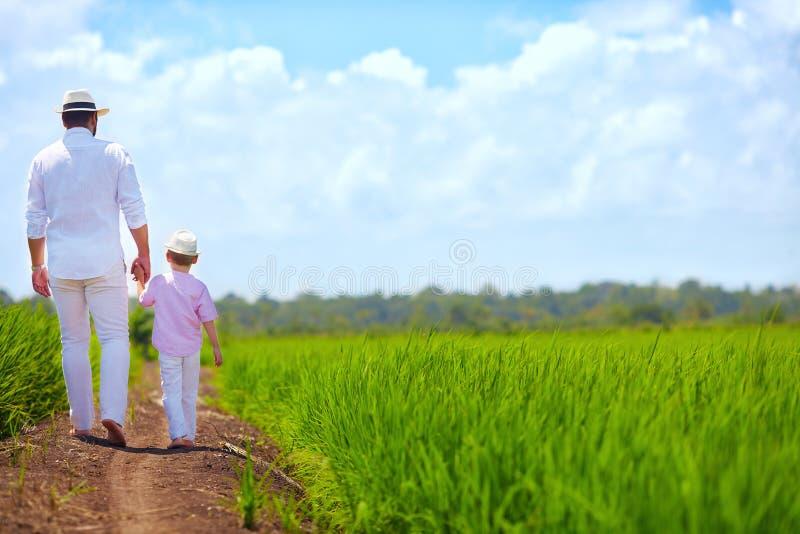 Ξυπόλυτοι πατέρας και γιος που περπατούν μέσω του τομέα ρυζιού στοκ εικόνες
