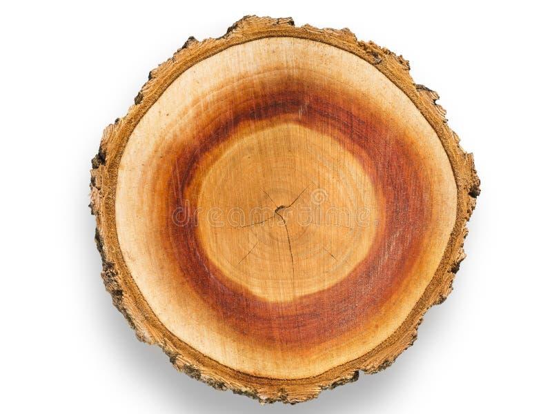 Ξυλογραφία δέντρων βερικοκιών στοκ εικόνες