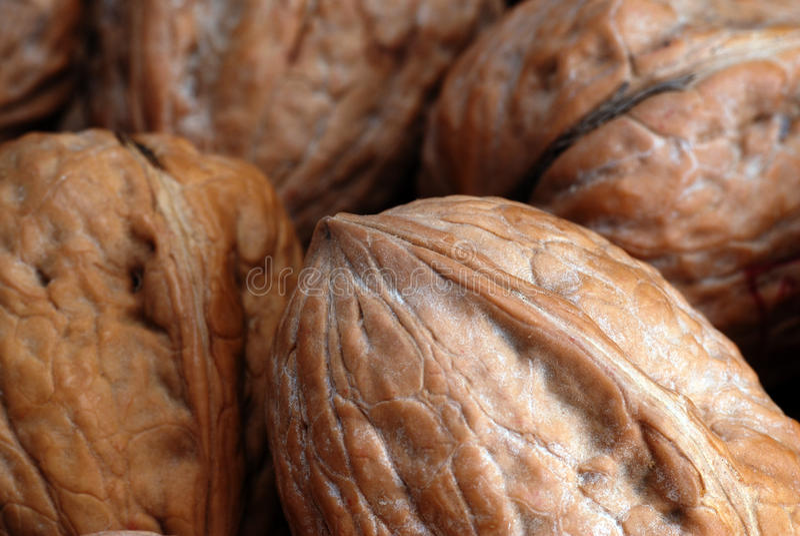 Ξύλα καρυδιάς στο κοχύλι στοκ φωτογραφίες με δικαίωμα ελεύθερης χρήσης