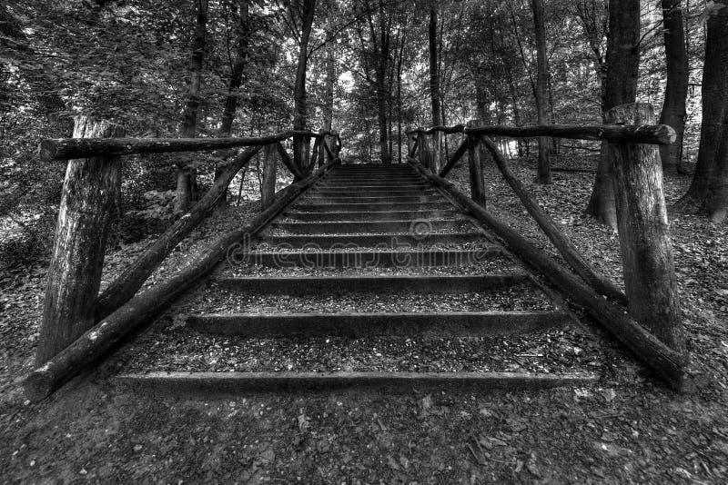 Ξύλινα σκαλοπάτια στο δάσος στοκ εικόνα με δικαίωμα ελεύθερης χρήσης