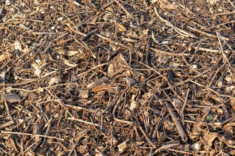 Ξύλινα τσιπ και μικρά κομμάτια του ξηρού ξύλου, που βρίσκονται στο έδαφος στοκ φωτογραφία