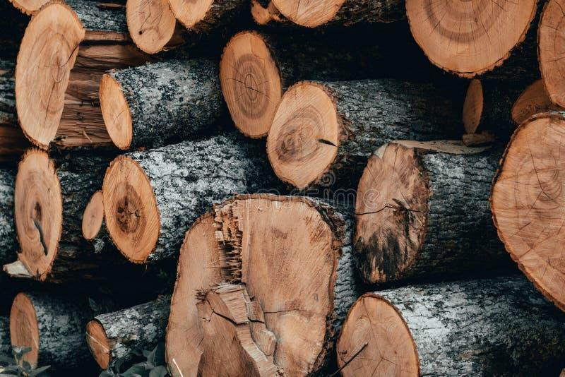 Ξύλινα φυσικά κούτσουρα περικοπών στοκ εικόνες με δικαίωμα ελεύθερης χρήσης