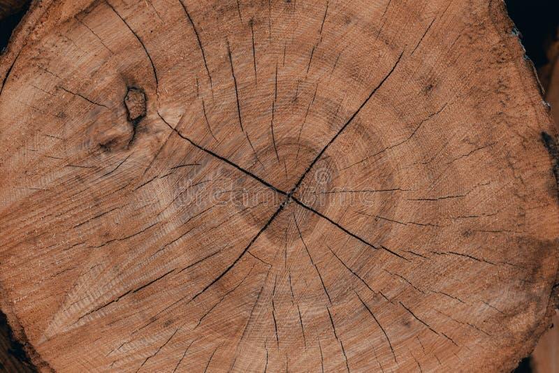 Ξύλινα φυσικά κούτσουρα περικοπών στοκ φωτογραφία με δικαίωμα ελεύθερης χρήσης