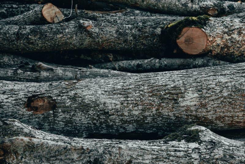 Ξύλινα φυσικά κούτσουρα περικοπών στοκ εικόνα