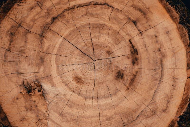 Ξύλινα φυσικά κούτσουρα περικοπών στοκ εικόνες