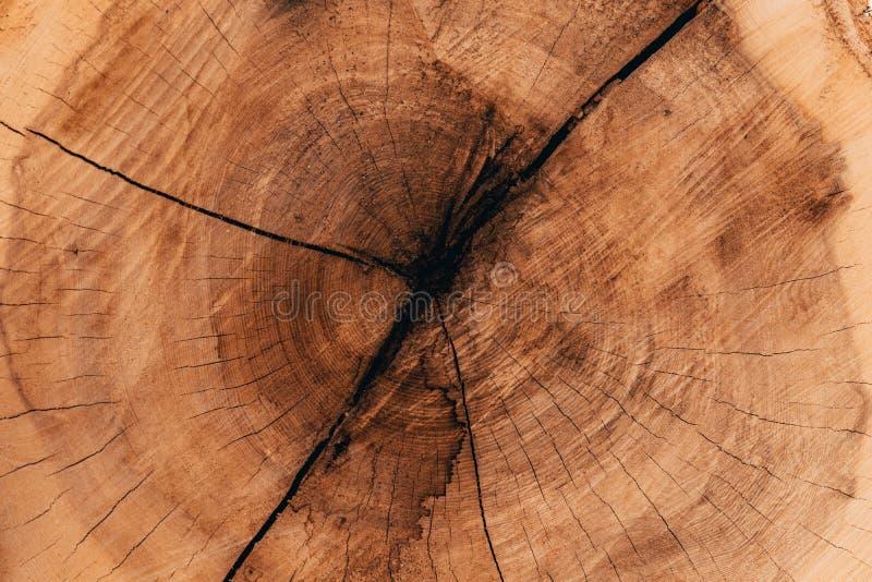 Ξύλινα φυσικά κούτσουρα περικοπών στοκ εικόνα με δικαίωμα ελεύθερης χρήσης