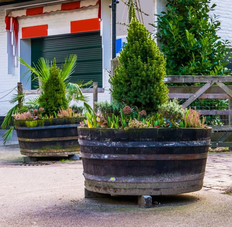 Ξύλινες σκάφες που γεμίζουν με τις εγκαταστάσεις και τα λουλούδια, τον κήπο και τις υπαίθριες διακοσμήσεις στοκ φωτογραφία με δικαίωμα ελεύθερης χρήσης
