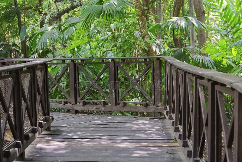 Ξύλινη γέφυρα μέσα στο τροπικό δάσος μαγγροβίων στοκ φωτογραφίες με δικαίωμα ελεύθερης χρήσης