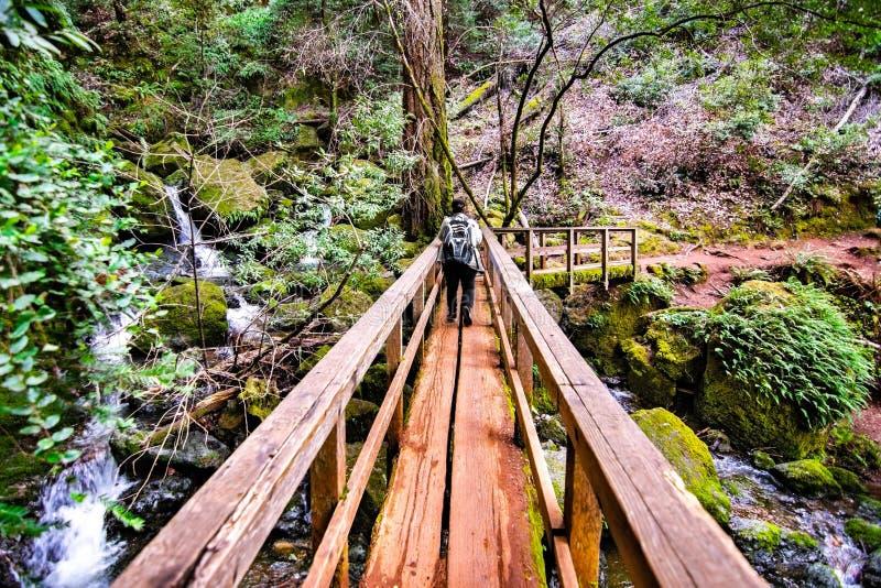 Ξύλινη γέφυρα στο ίχνος καταρρακτών στον υδροκρίτη ΑΜ Tamalpais, περιοχή κόλπων κομητειών του Marin, βόρειο Σαν Φρανσίσκο, Καλιφό στοκ εικόνες
