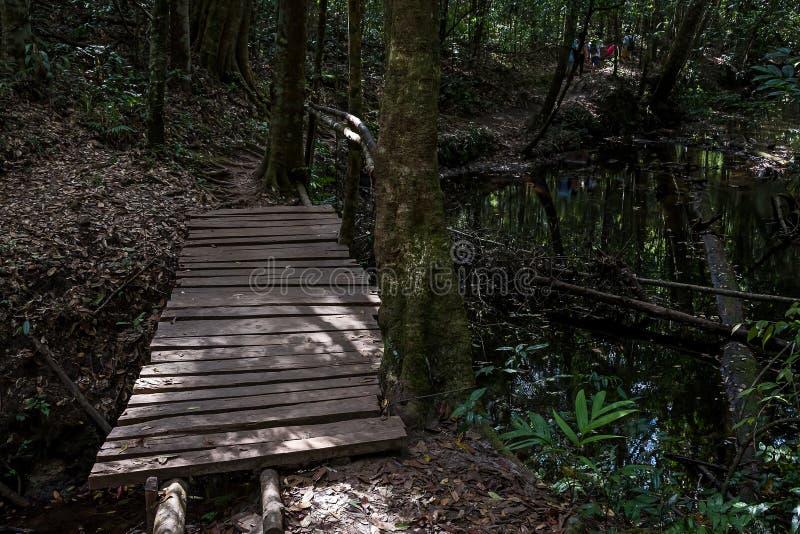Ξύλινη γέφυρα στο βαθύ δάσος στοκ φωτογραφία