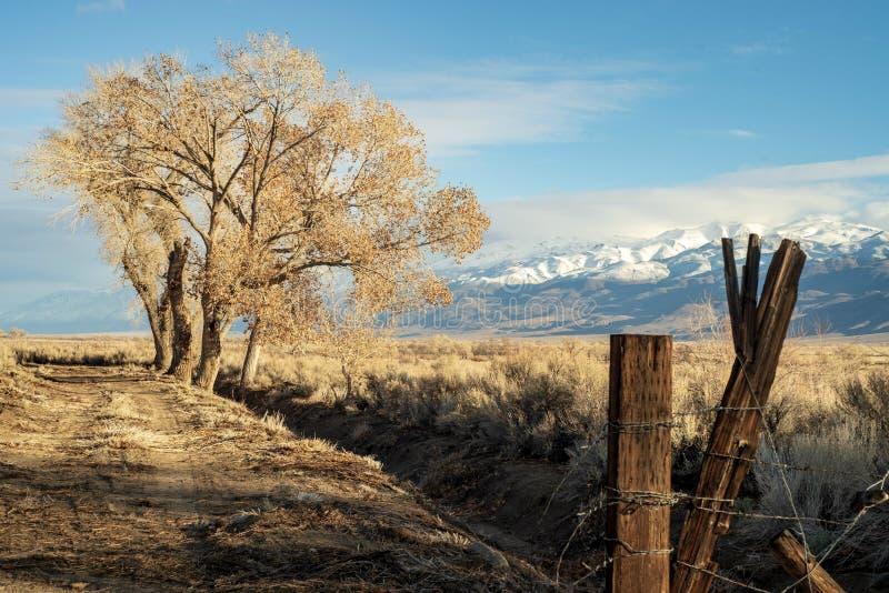 Ξύλινη θέση στον αγροτικό βρώμικο δρόμο με το χειμερινό δέντρο και τη χιονώδη σειρά βουνών στοκ εικόνα