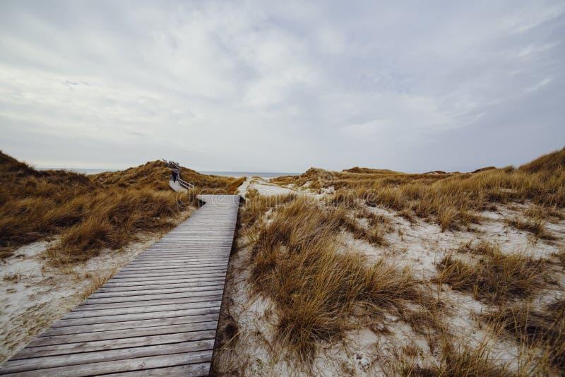 Ξύλινη πορεία με τα σκαλοπάτια ή θαλάσσιος περίπατος που οδηγεί μέσω του τοπίου αμμόλοφων σε Amrum στοκ φωτογραφία
