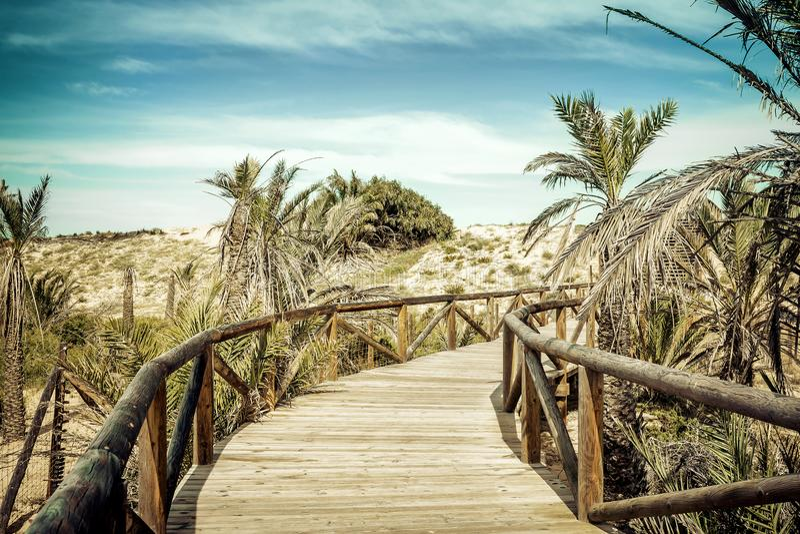 Ξύλινη πρόσβαση παραλιών πέρα από τους αμμόλοφους άμμου Αλικάντε, Ισπανία στοκ εικόνες με δικαίωμα ελεύθερης χρήσης