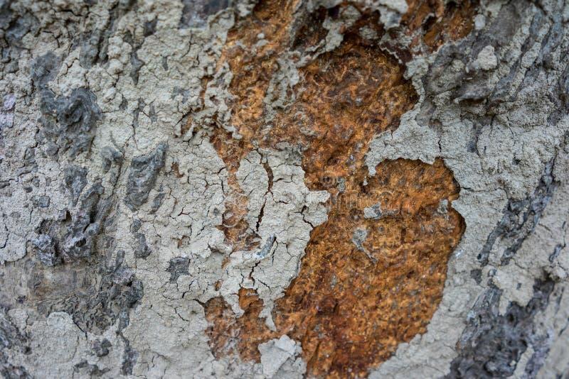 Ξύλινη σύσταση υποβάθρου φλοιών στοκ εικόνα
