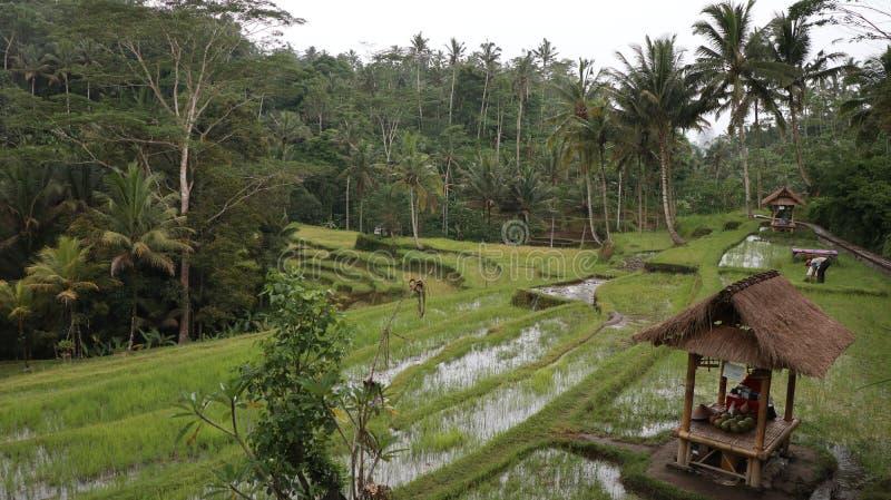 Ξύλινος θάλαμος σε έναν τομέα χλόης με τα ψηλά δέντρα στο υπόβαθρο που βρίσκεται στο Μπαλί στοκ εικόνες
