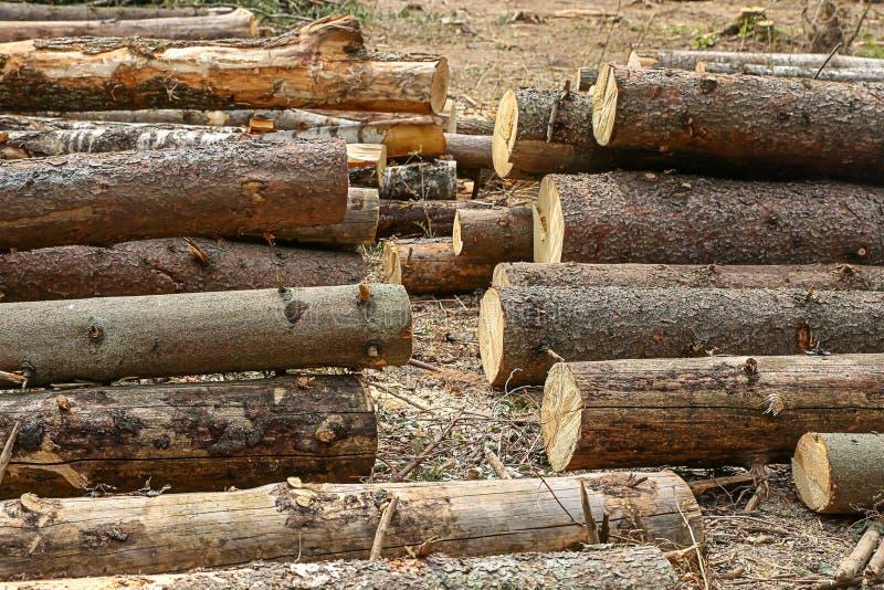 Ξύλινος κορμός πολύ σχέδιο σωρών σωρών δέντρων που χτίζει το κενό υπόβαθρο αγροτικό στοκ εικόνα