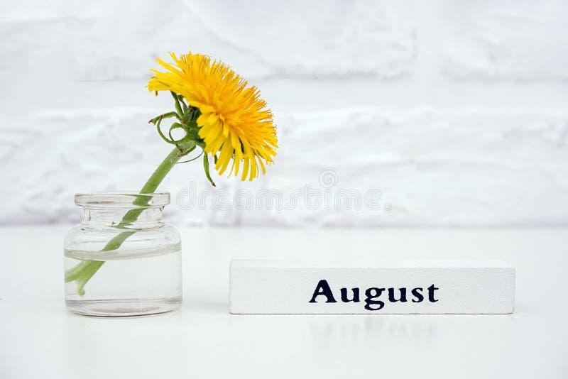 Ξύλινος μήνας Αύγουστος ημερολογιακού καλοκαιριού και κίτρινη πικραλίδα στο βάζο μπουκαλιών στο άσπρο διάστημα αντιγράφων τουβλότ στοκ εικόνα