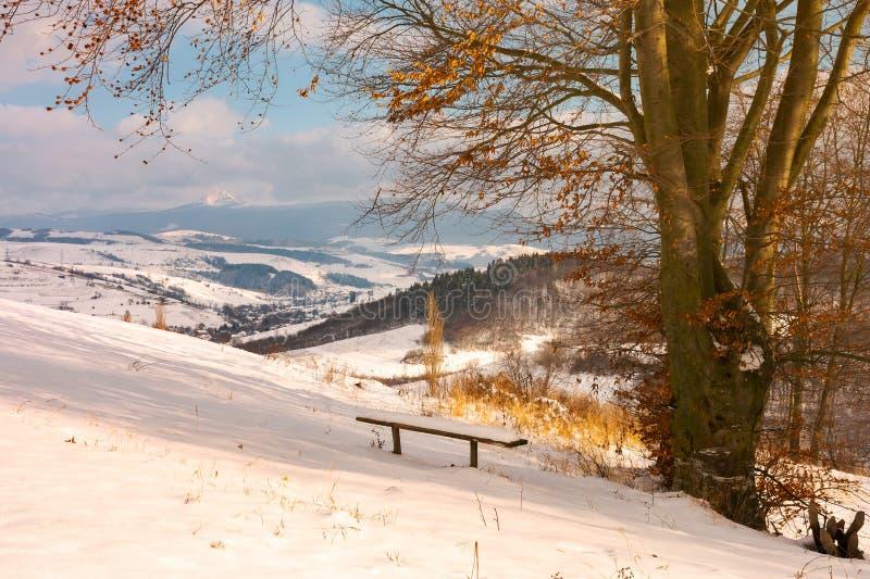 Ξύλινος πάγκος κάτω από το άφυλλο δέντρο το χειμώνα στοκ εικόνες