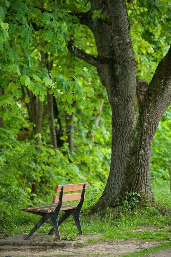 Ξύλινος πάγκος στο αστικό πάρκο στην άνοιξη στοκ εικόνα με δικαίωμα ελεύθερης χρήσης