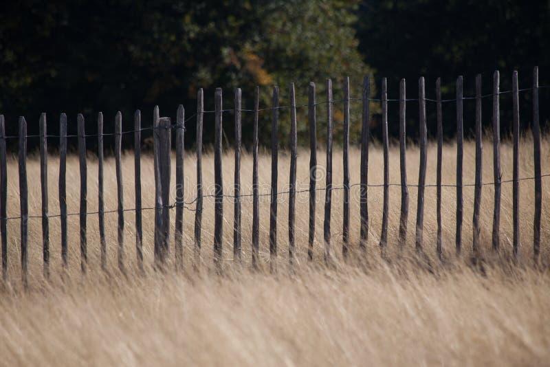 Ξύλινος φράκτης στο χλοώδες λιβάδι στοκ φωτογραφίες