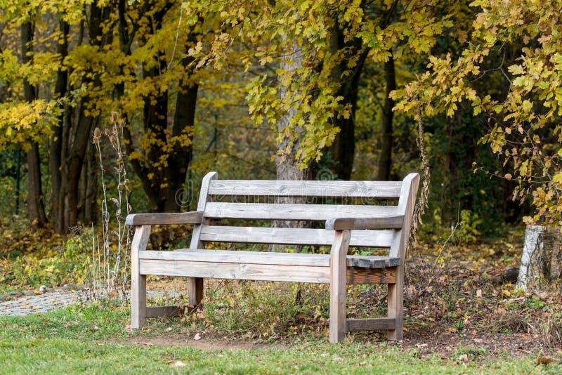 Ξύλινο έλκηθρο μπροστά από ένα δάσος στοκ εικόνες με δικαίωμα ελεύθερης χρήσης