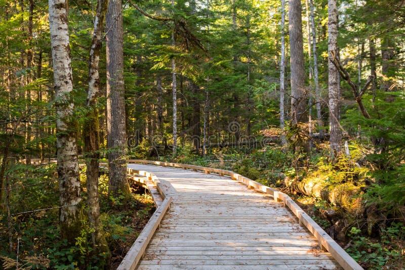 Ξύλινο ίχνος δίπλα στο κέντρο επισκεπτών των βόρειων καταρρακτών, που περιβάλλεται από τα δέντρα στοκ φωτογραφία με δικαίωμα ελεύθερης χρήσης