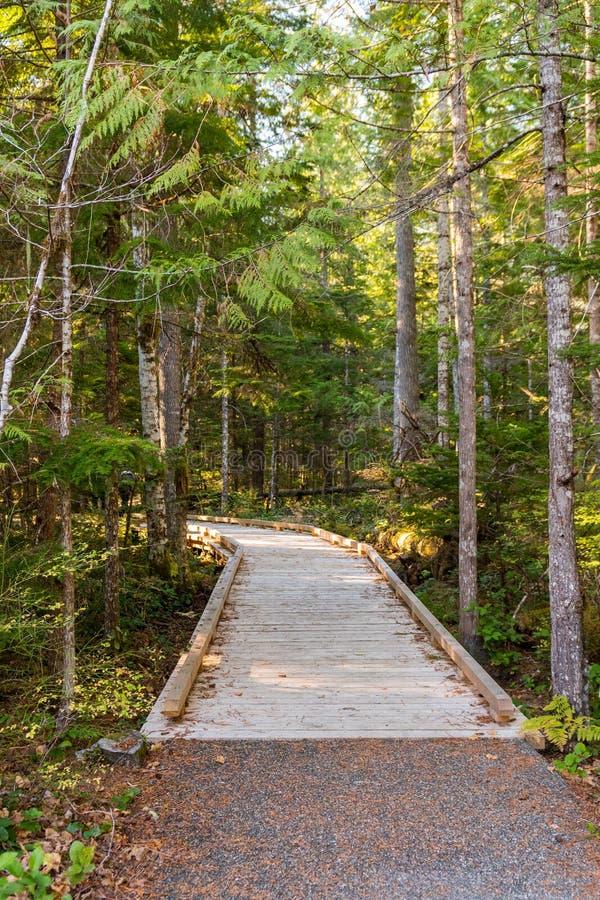 Ξύλινο ίχνος δίπλα στο κέντρο επισκεπτών των βόρειων καταρρακτών, που περιβάλλεται από τα δέντρα στοκ εικόνες