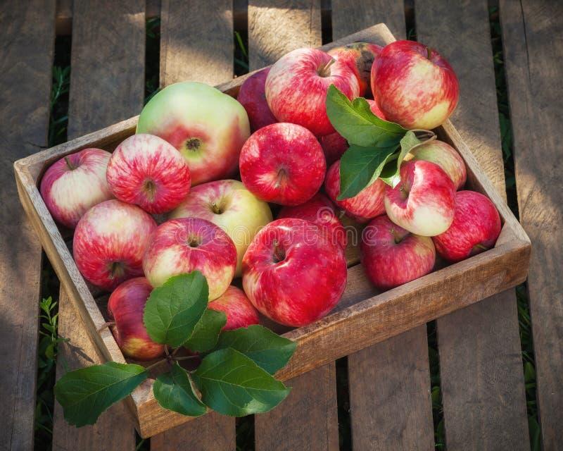 Ξύλινο κιβώτιο των κόκκινων μήλων στους ξύλινους πίνακες στοκ εικόνα