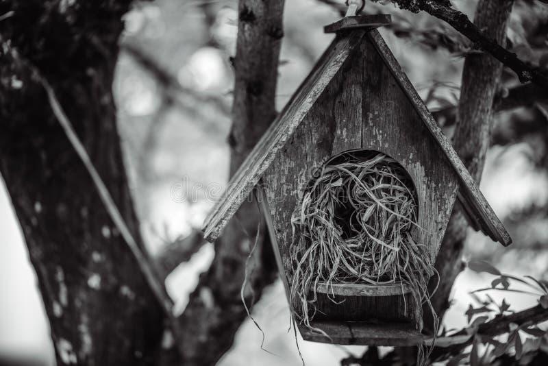 Ξύλινο σπίτι φωλιών πουλιών στο δέντρο στοκ φωτογραφία με δικαίωμα ελεύθερης χρήσης