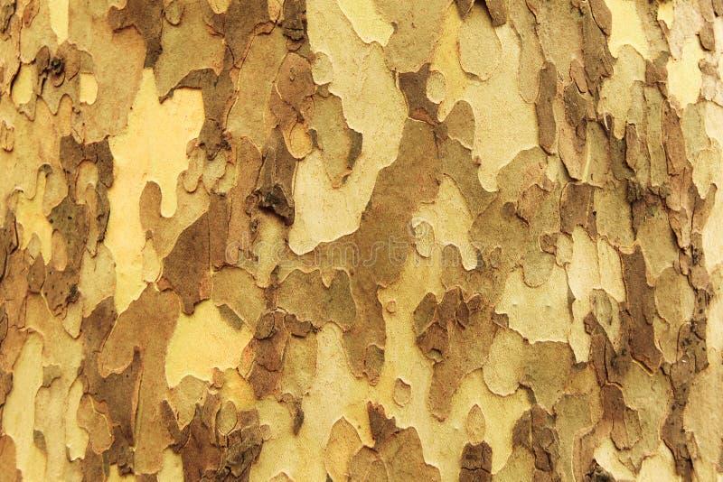 Ξύλινο σχέδιο από το φυσικό φλοιό δέντρων στοκ εικόνες