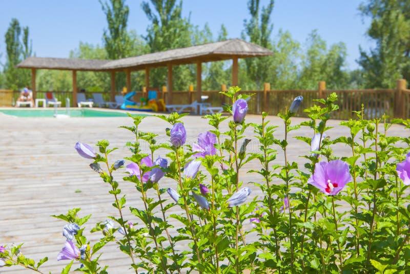Ξύλινο υπόβαθρο λουλουδιών πισινών στοκ εικόνες