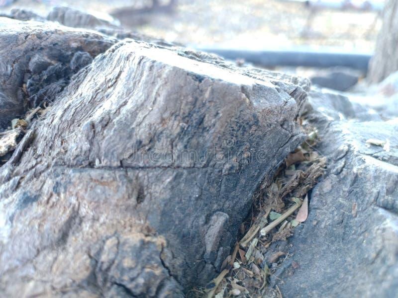 ξύλινο PIC στοκ φωτογραφία με δικαίωμα ελεύθερης χρήσης