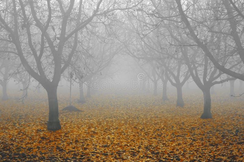 Download ξύλο καρυδιάς αλσών ομίχλης Στοκ Εικόνα - εικόνα από ευμετάβλητος, συγκομιδή: 2229517