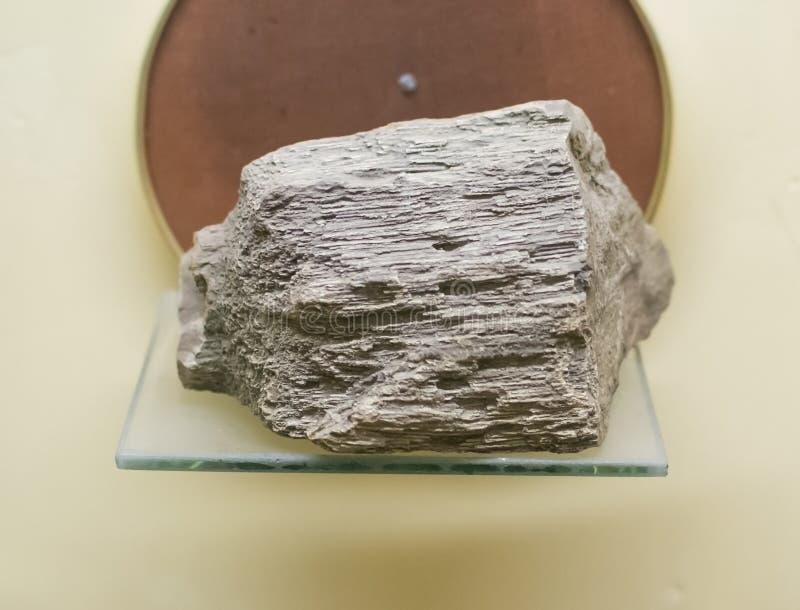 Ξύλο με απολιθωμένα μορφή στοκ φωτογραφίες με δικαίωμα ελεύθερης χρήσης