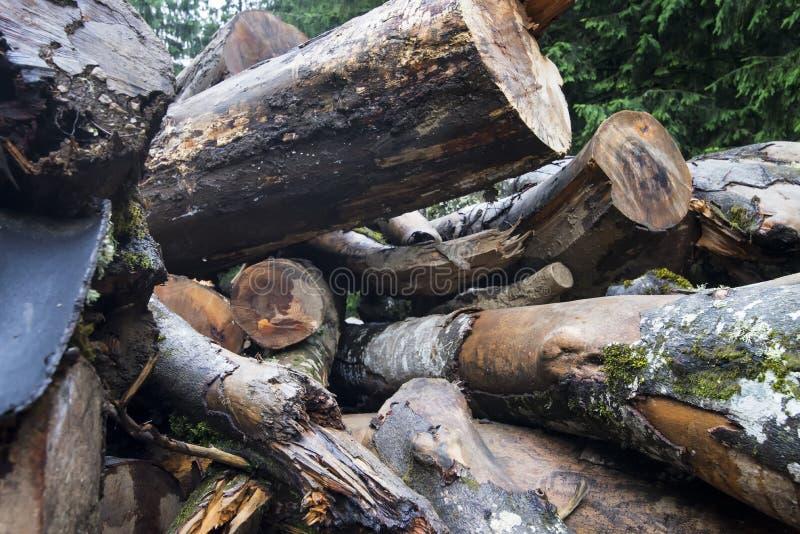 Ξύλο ξυλείας στοκ εικόνα