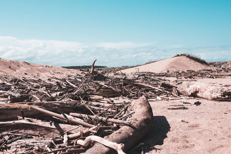 Ξύλο στην παραλία σε μια ηλιόλουστη ημέρα με το μπλε ουρανό στοκ εικόνα