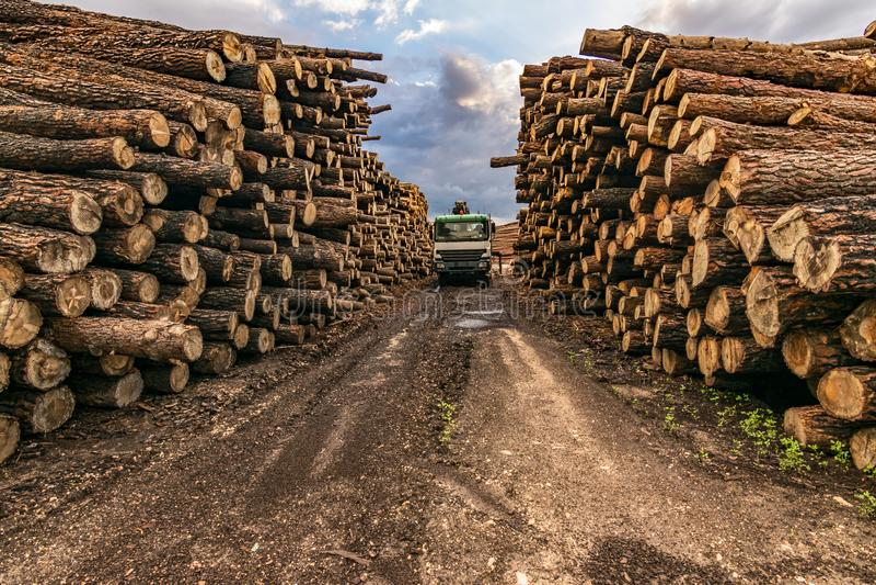 Ξύλο φόρτωσης φορτηγών σε μια υπαίθρια αποθήκη εμπορευμάτων ξύλου πεύκων στοκ εικόνες
