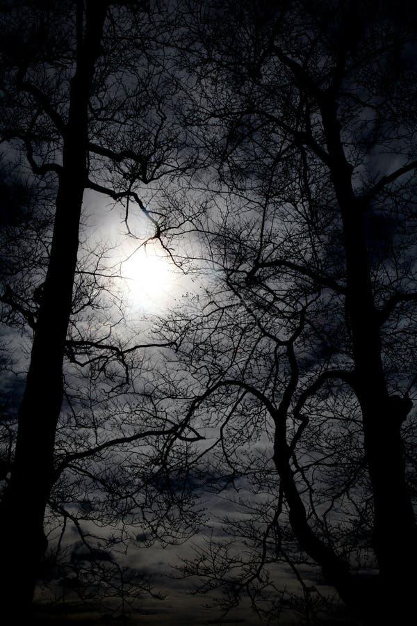 Ξύλα νύχτας στοκ φωτογραφίες