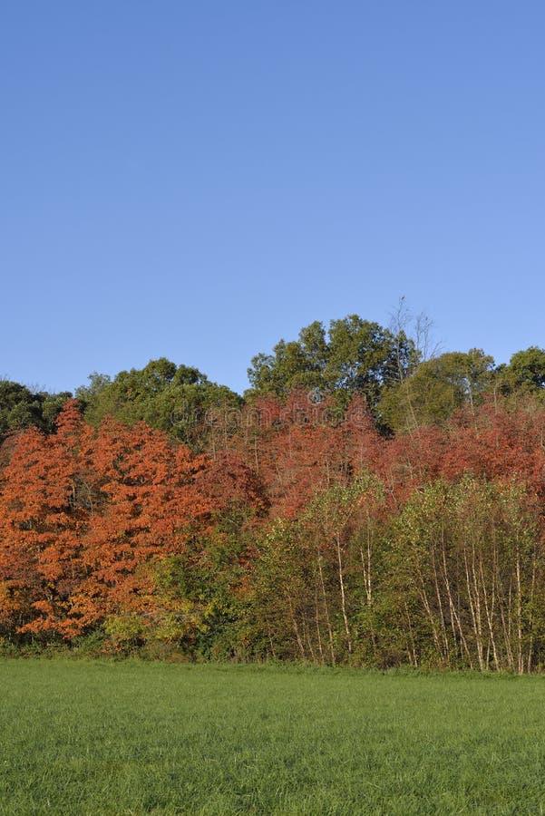 Ξύλα το φθινόπωρο splender στοκ εικόνες