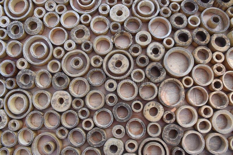 Ξύλινα δαχτυλίδια 1 κύκλων στοκ εικόνα με δικαίωμα ελεύθερης χρήσης