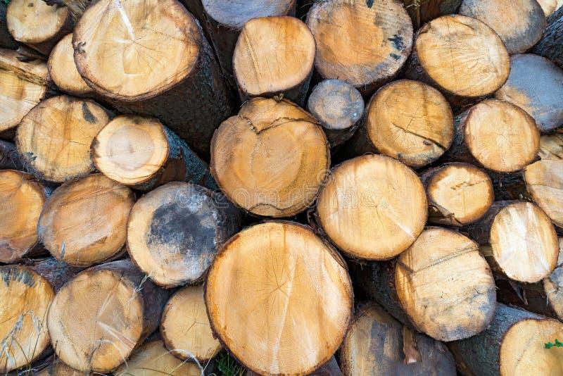 Ξύλινα κούτσουρα του πεύκου που συσσωρεύονται στοκ εικόνα με δικαίωμα ελεύθερης χρήσης