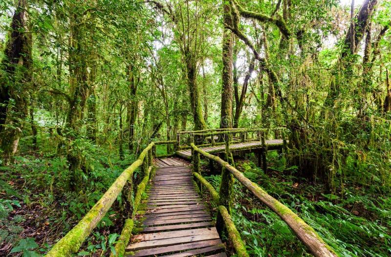 Ξύλινη γέφυρα στο ίχνος φύσης angka στο εθνικό πάρκο doi inthanon στοκ φωτογραφία με δικαίωμα ελεύθερης χρήσης